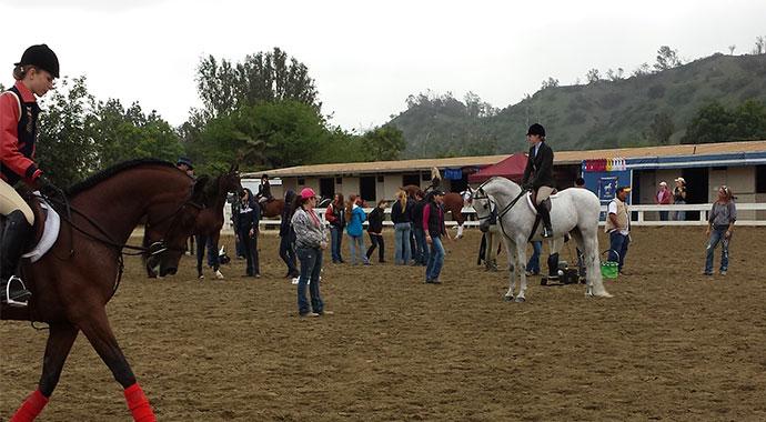 """Spring Arabian Horse Show"""