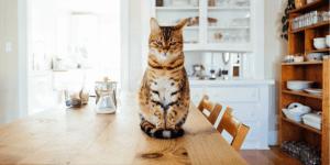 Facebook - Imaginea nu are nimic în comun cu acest articol, dar eu am observat că pisicuțele prind bine la clicks :)