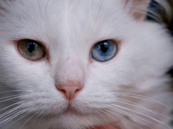 publicitate cu pisici