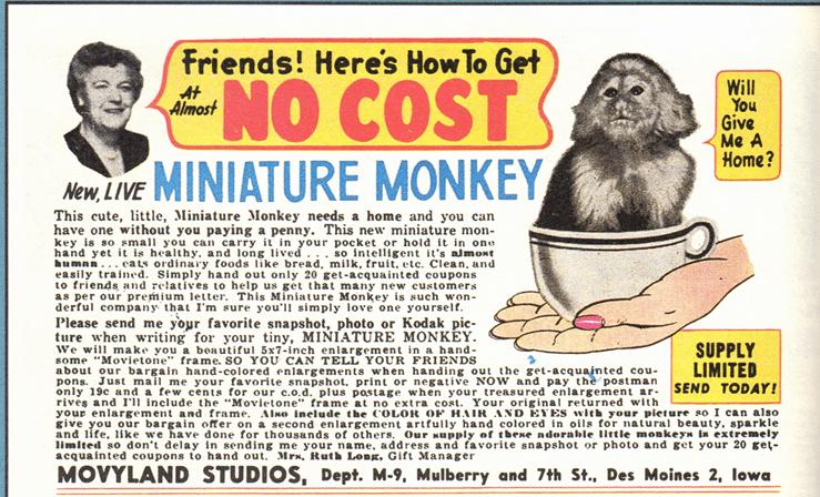 1020-monkey