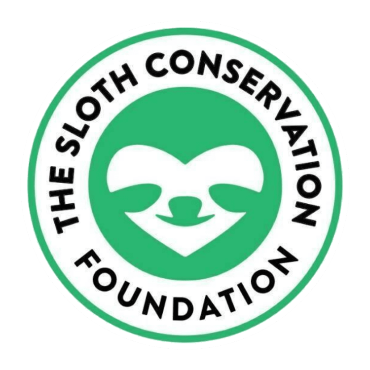 sloth conservation foundation