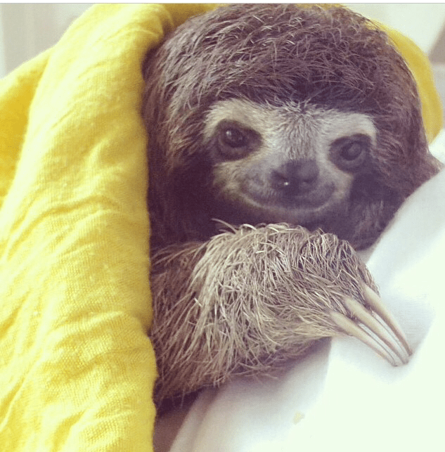 Image result for sloth in bed