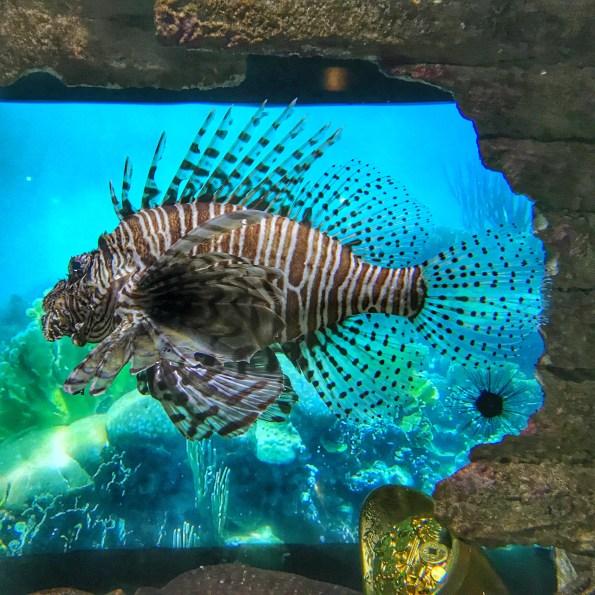 Malaysia 2018 Aquaria KLCC lionfish