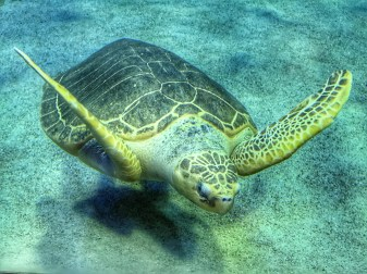 Malaysia 2018 Aquaria KLCC turtle