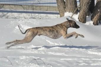 1-Duney-snow-running