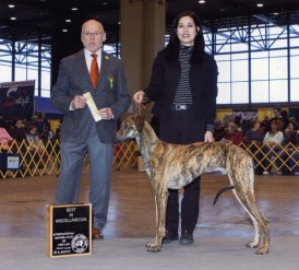 Toby winning Best in Miscellaneous Class in February 2012 at the IKC cluster under judge Edd Bivins.