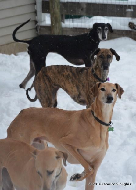 Riva, Jori, Jasper, Ami