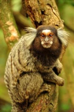 Monkeys on the way to Urca Mountain