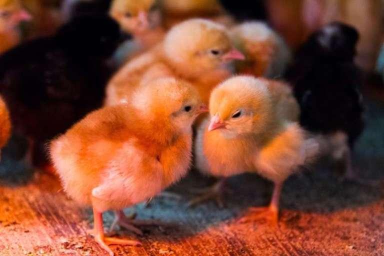 Poslanci petih strank združeni: z dopolnilom vračajo definicijo živali kot čutečih bitij v stvarnopravni zakonik