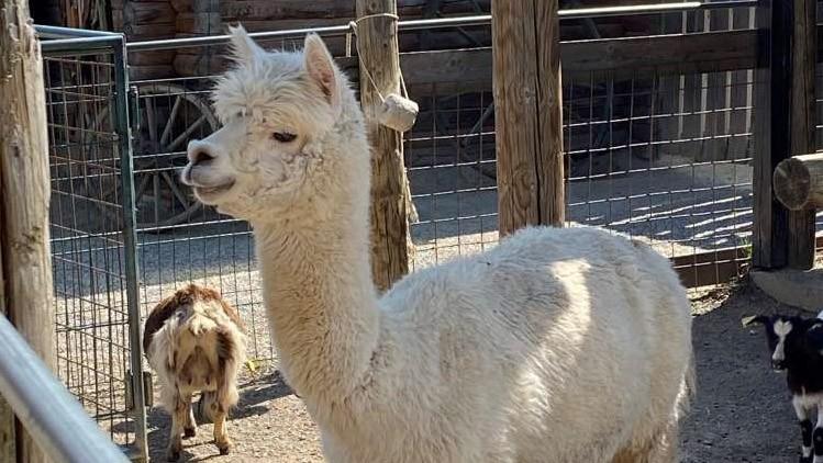 Ideja za izlet: Skrivni živalski vrt z desetletno tradicijo