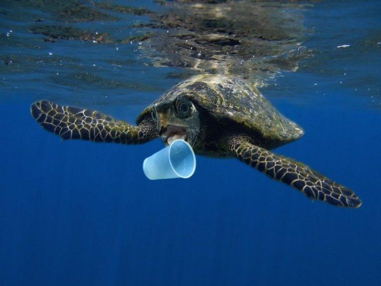 8 plastičnih stvari, ki se jim lahko takoj odpovemo