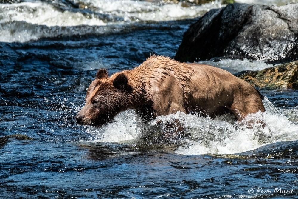 Anan Bear Wildlife Viewing Site