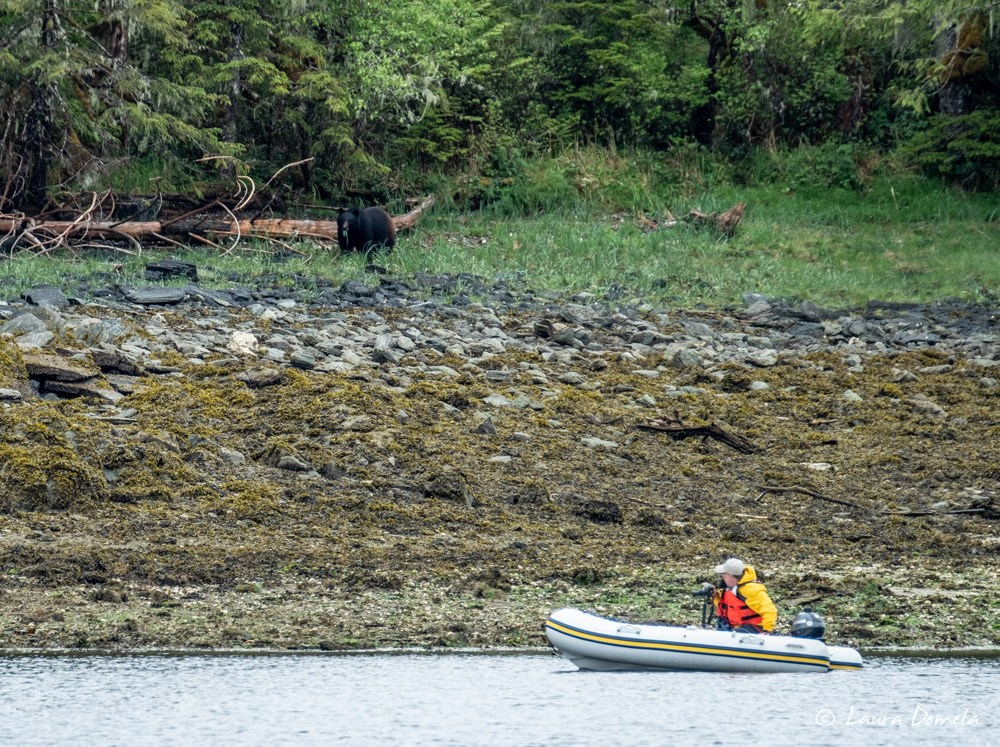Flotilla participant Ralph, watching a bear onshore from his dinghy