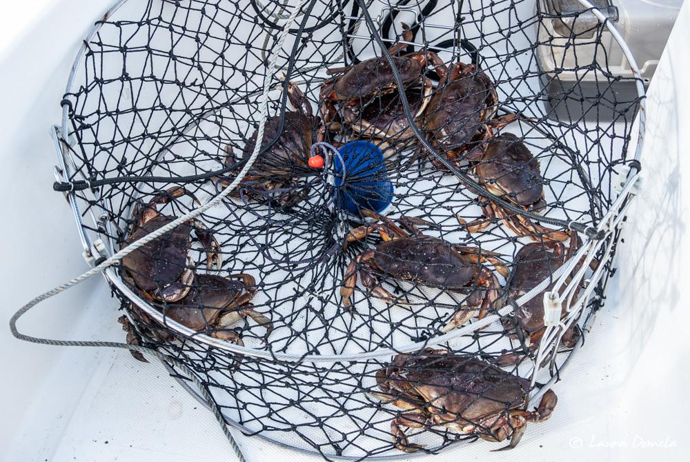 thomsplace_crab-0687-1