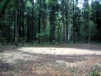 腐葉土の森