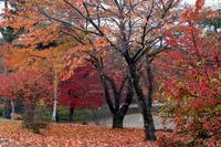 八ヶ岳・富士見高原の紅葉