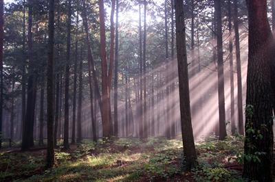 森のスポットライト