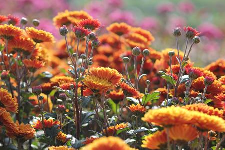 花を撮すとマクロが欲しくなる。