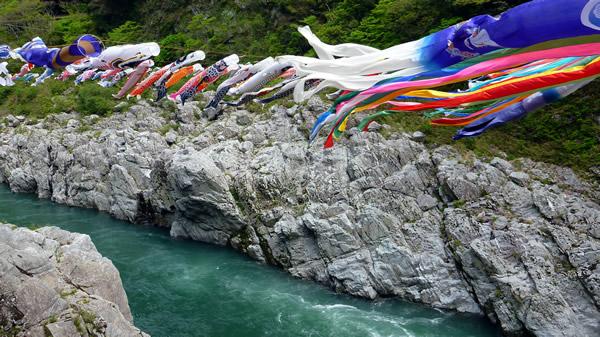 大歩危峡を鯉のぼりが泳ぐ