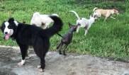 skinpuppies chase