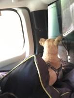 first truck ride