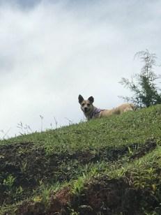 nica on ridge