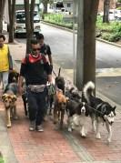 dog walker1