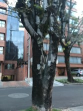 tree doctor1