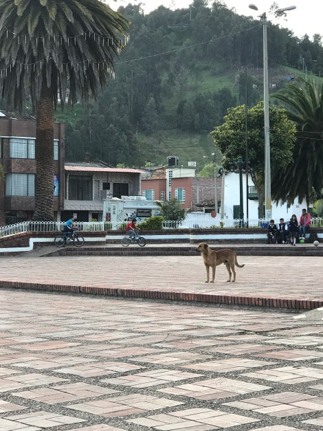 camrpsite central plaza
