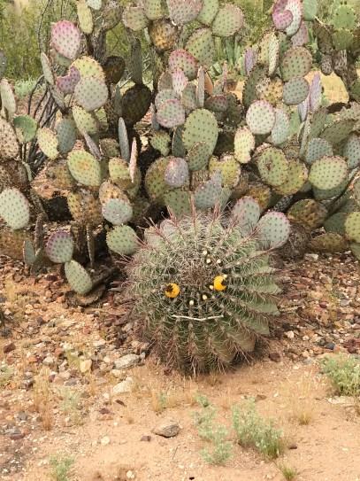 cactus googly face.jpg