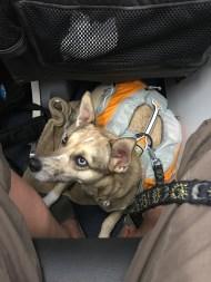 nica on airplane floor