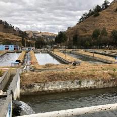 trout farm many tanks