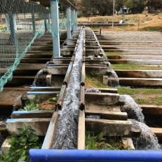 trout farm pipelines