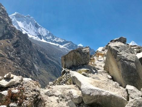 laguna paron dogs and glaciers.JPG