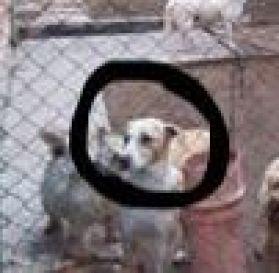 tan and white dog. jpg.jpeg
