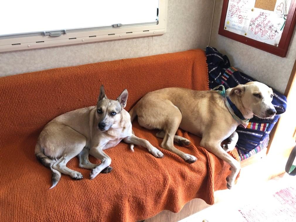 dogs in camper.JPG