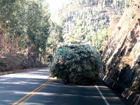 following a shaggy truck