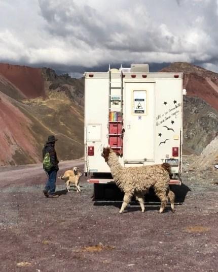 parking lot llama and dogs.JPG