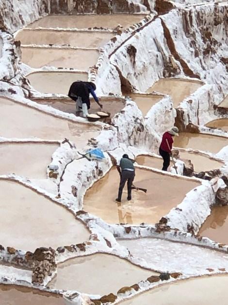 raking salt beds