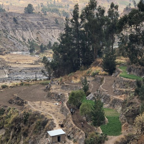 traditional farming on the terraces
