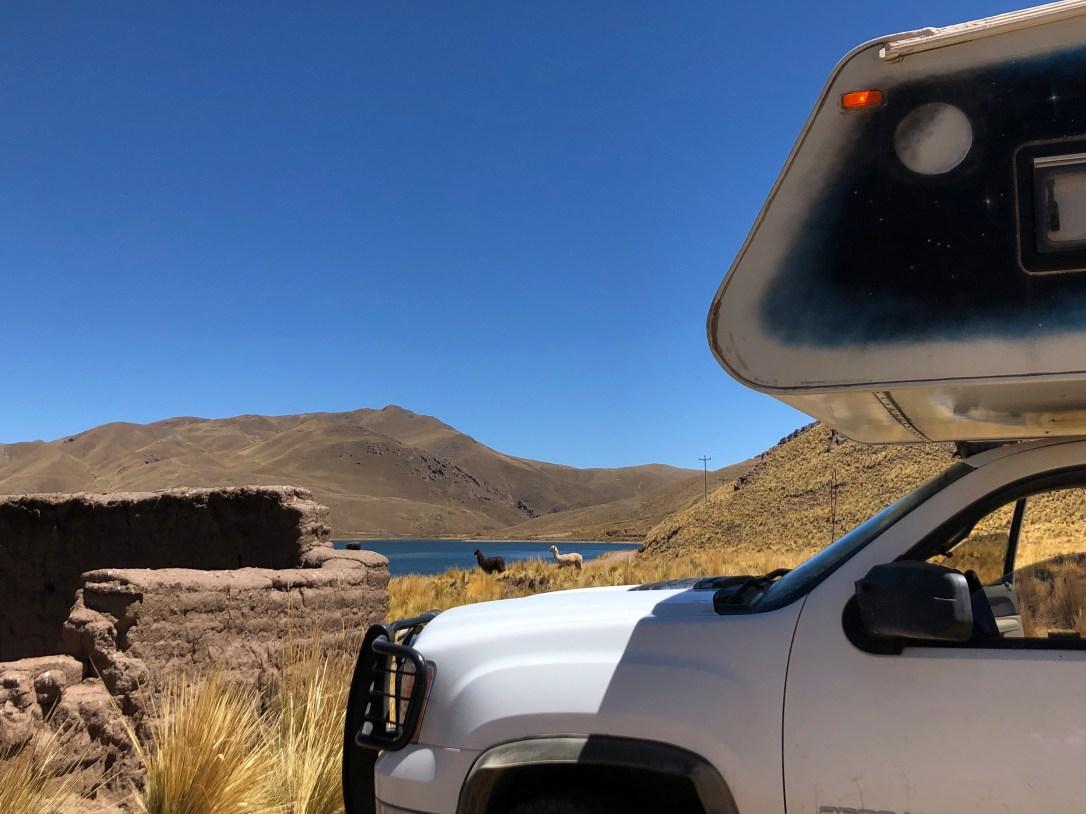 vicunas llamas at the lake.JPG