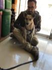visiting a vet