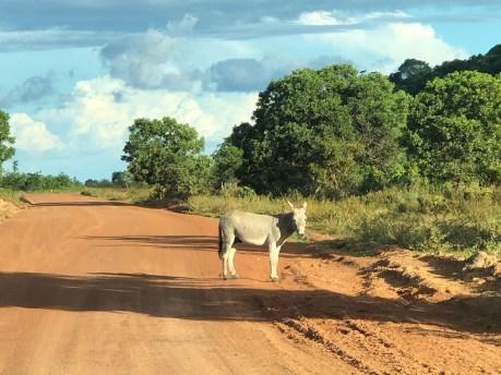 donkey on the road.JPG