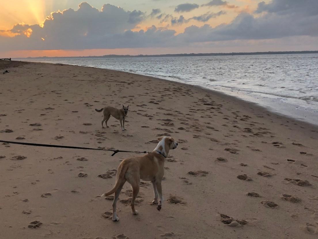 beach nica and pacha.JPG