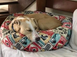 dog bed fail