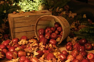 Fall Apple Bushel