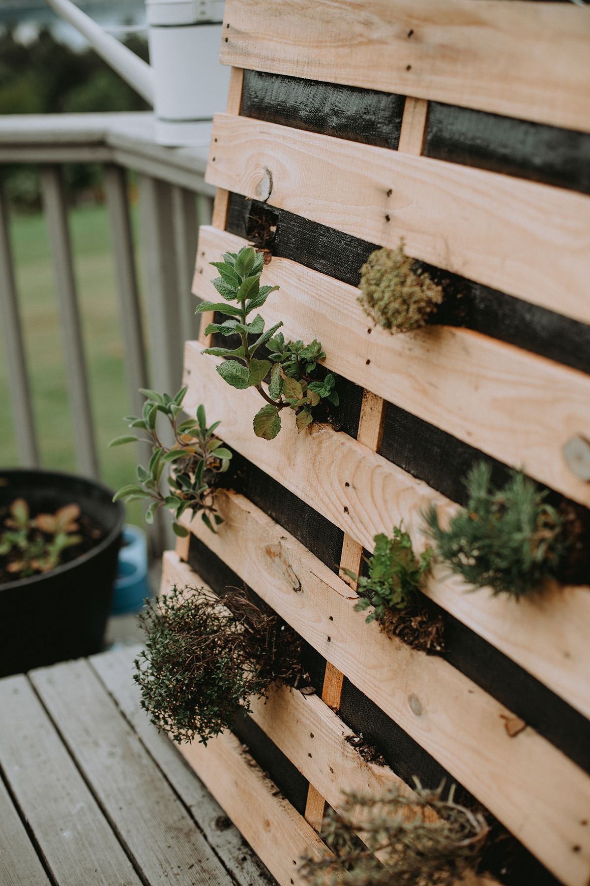A variety of herbs poke through a pallet planter.