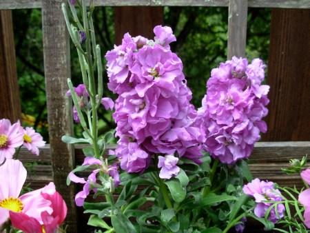 garden-stock