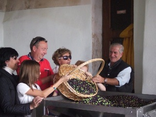 raccolta olive frantoio