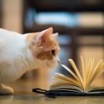 Książka na prezent – niebezpieczny pomysł